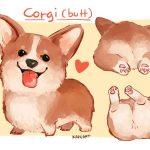 Corgi Ball Z, les boules du corgi.